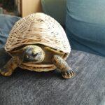 Geflochtene Schildkröte
